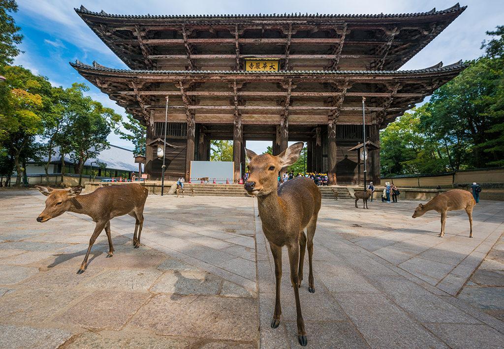 Олени в Японии